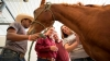 Animal Science degree students working with a horse
