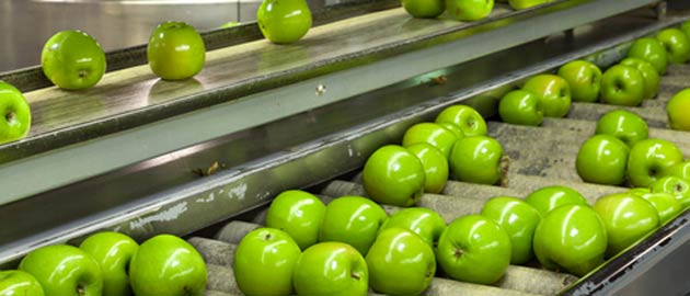 food process engineering- conveyor sorting of apples