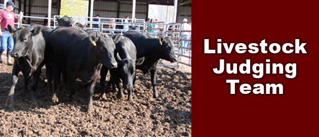 Livestock Judging Team Competitive Teams Agricultural