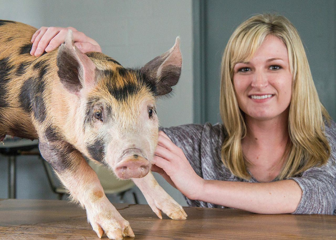 Student Researcher Investigates Swine Feed Efficiency